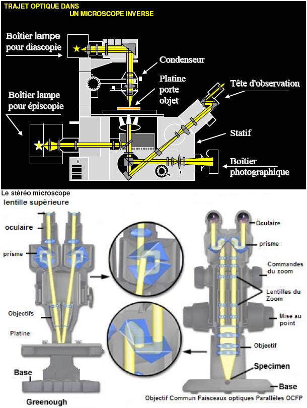 Trajet optique dans un microscope